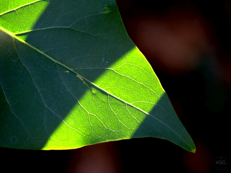 Shadows on leaf