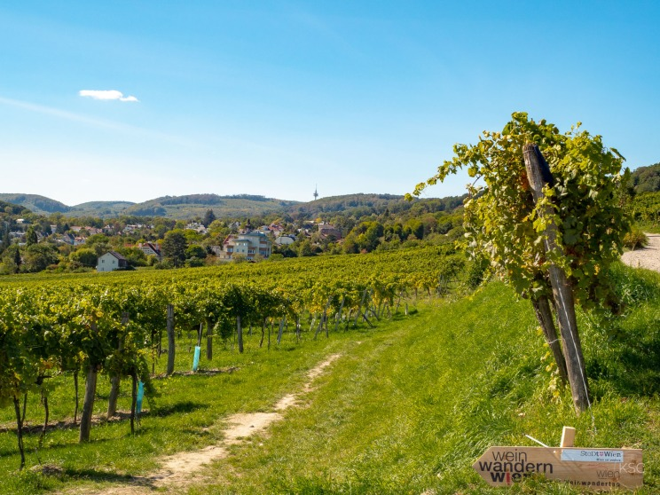 Vienna vineyards