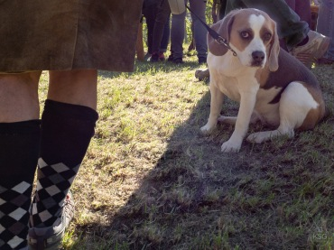 Why the unhappy look, beagle?
