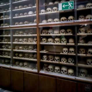 An impressive gallery of skulls