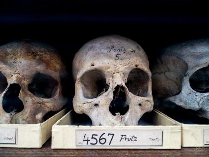 Skull Nr. 4567