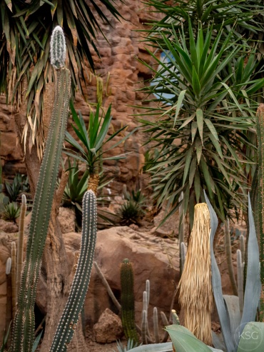 Cacti and succulents at the desert house