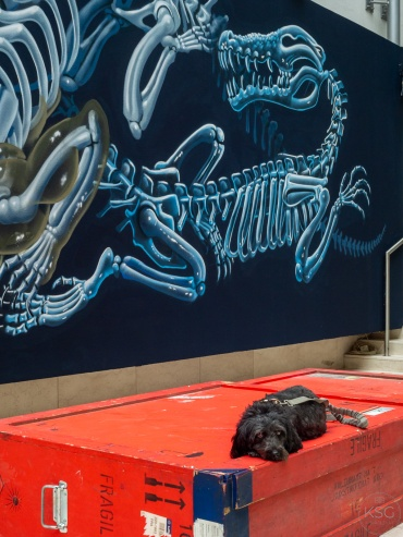 Alfonso lounging in front of art by Nychos