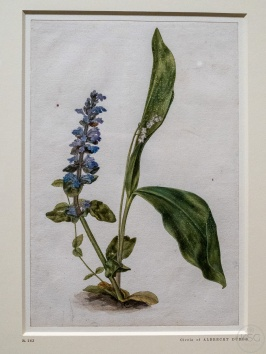 Bugle and Lily-of-the-Valley, 1503/07
